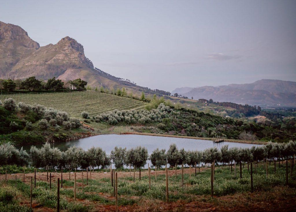 Blick vom Ferienhaus auf dem Weingut