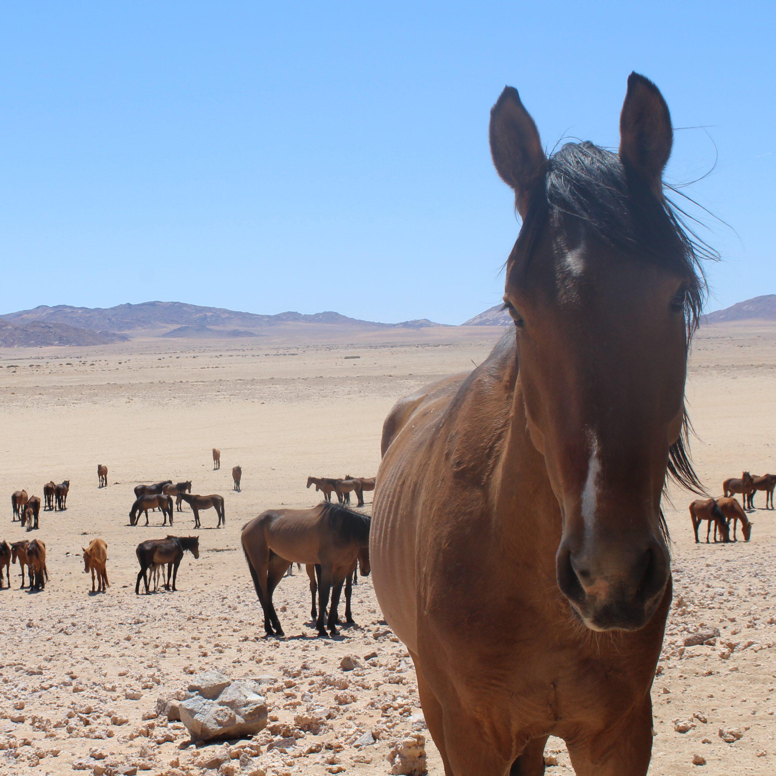 Namibia2Cape