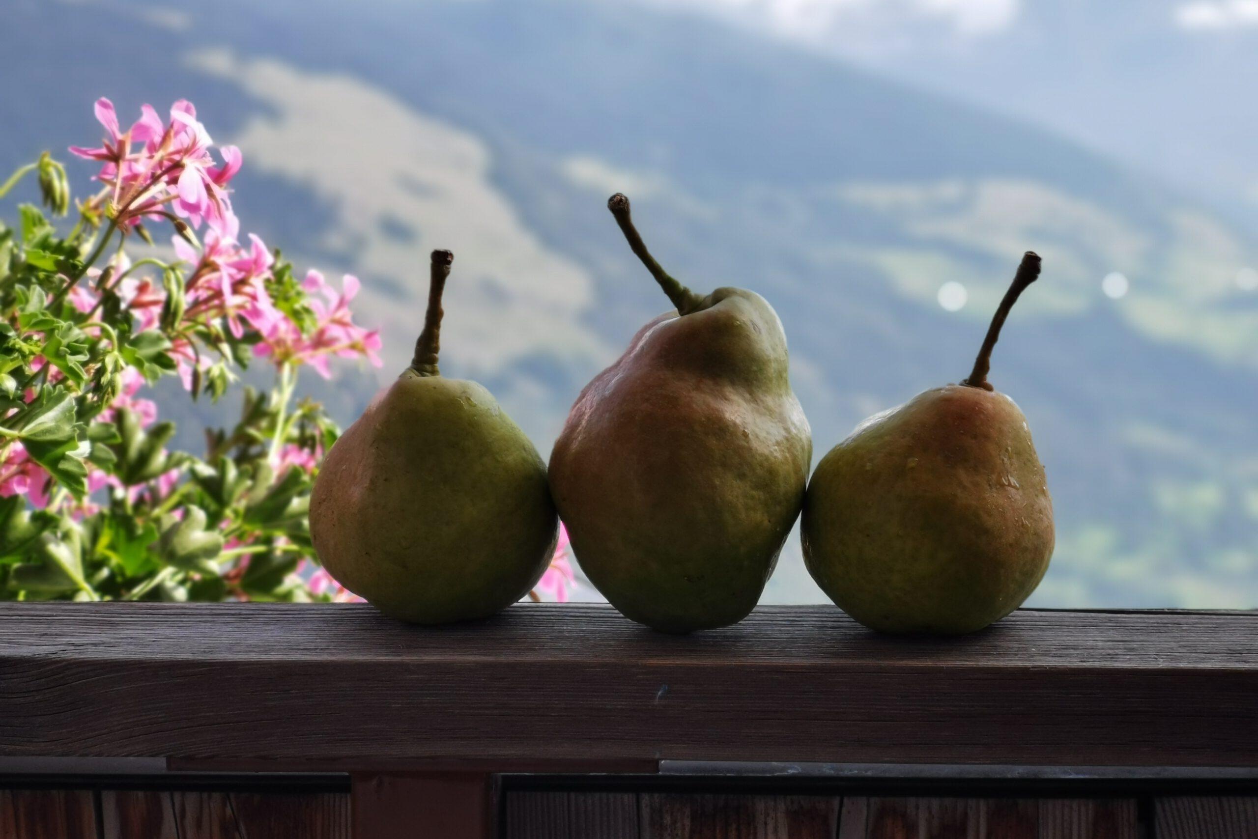 Walter und die Palabirne – wie ein Südtiroler Obstbauer eine uralte Birnensorte wiederentdeckt