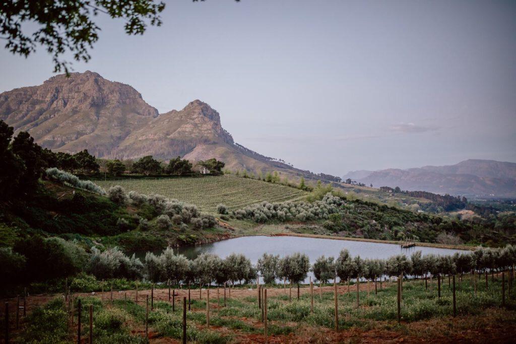 Weingut bei Stellenbosch - Vorspiel für unsere Mini-Hochzeit