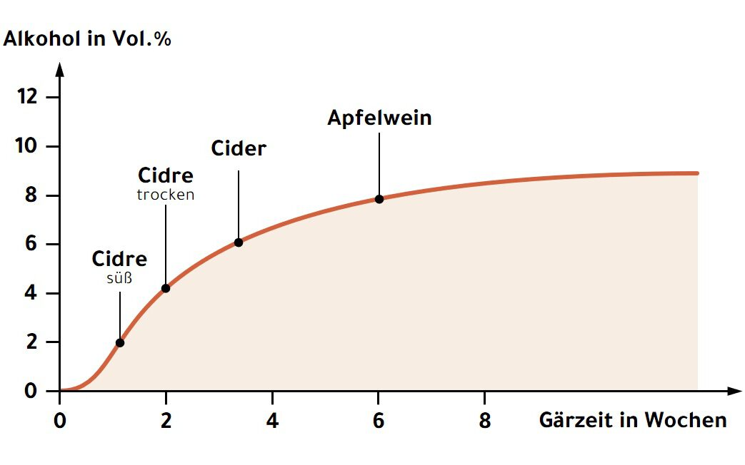 Alkoholgehalt während der Gärung des Apfelweins