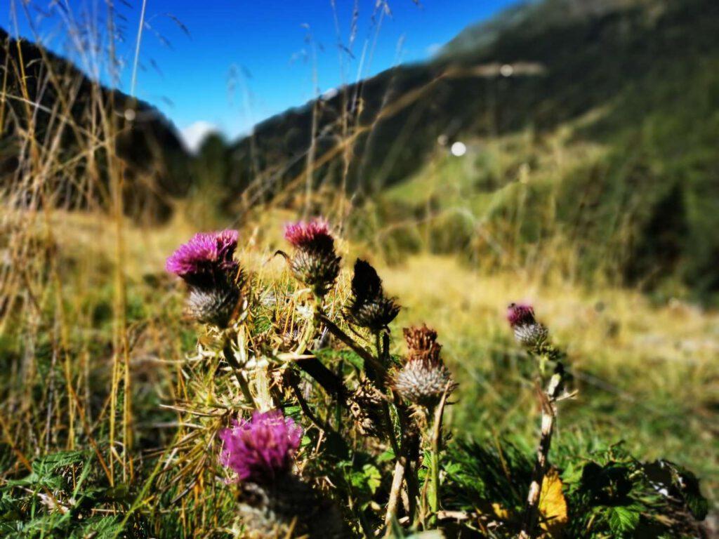 Nahezu unberührt - das Matschertal im Norden Südtirols