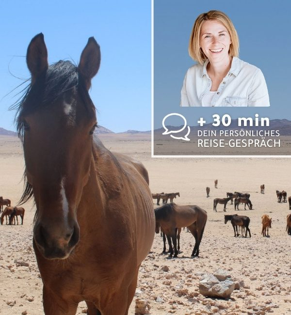 Namibia2Cape + 20 min Reise-Gesprächund_20min