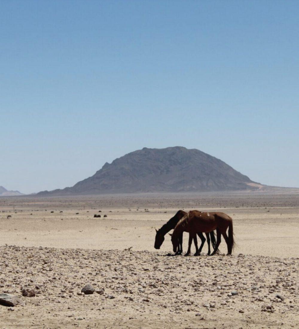 Reise-Filmtipp - Afrikas Wilder Westen