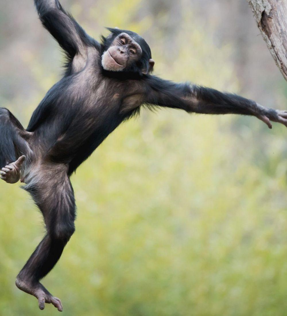 Reise-Filmtipp - Jane und die Schimpansen