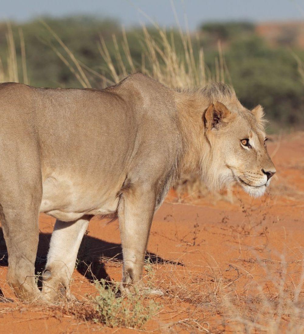 Reise-Filmtipp - Wüstenlöwen Namibia